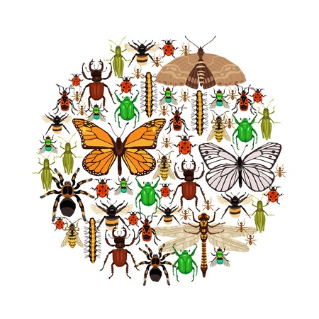 Insects Round Concept. Insects Illustration. Insects Decorative Symbols. Insects Flat Design. Insects Elements Collection. Illustration