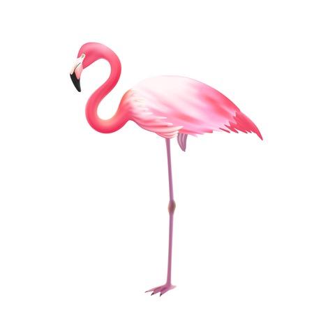 핑크 우아한 플라밍고 조류 서 흰색 배경에 대해 한쪽 다리에 현실적인 격리 된 이미지 아이콘 그림