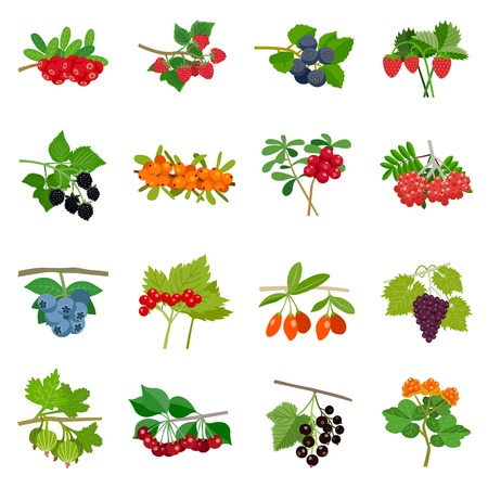 chicouté: Colorful berries icons set of different kinds in flat style isolated illustration Illustration