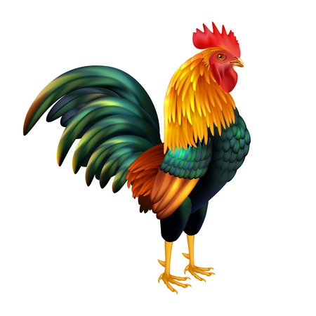 fowls: Colorful realistic rooster as symbol of 2017 Chinese New Year on white background isolated vector illustration
