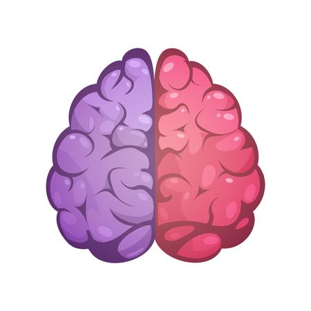 인간의 두뇌 두 개의 서로 다른 색깔의 상징적 인 왼쪽과 오른쪽 대뇌 반구 모델 이미지 아이콘 추상적 인 벡터 일러스트 레이 션