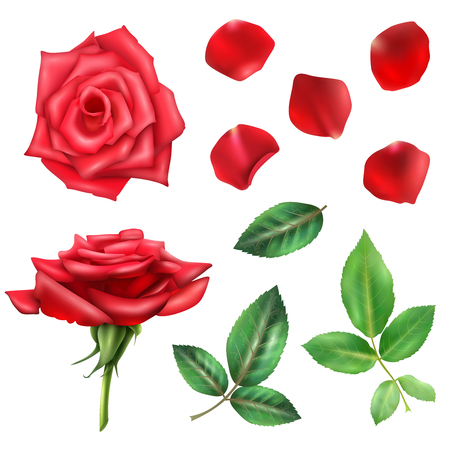 fragrance: Beautiful blooming red rose flower petals and leaves realistic set isolated on white background vector illustration Illustration
