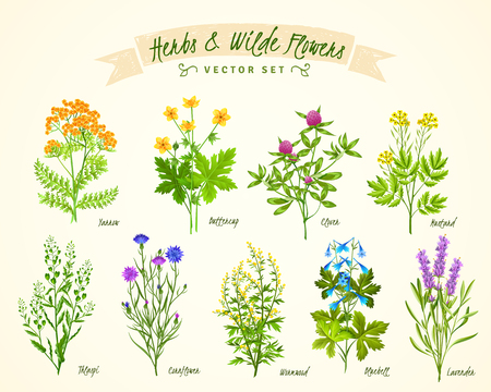 yarrow: Flat white background with set of various blooming herbs and wild flowers with their names isolated vector illustration