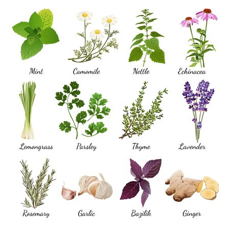 Set with organic herbs objects and wildflowers elements isolated vector illustration Çizim
