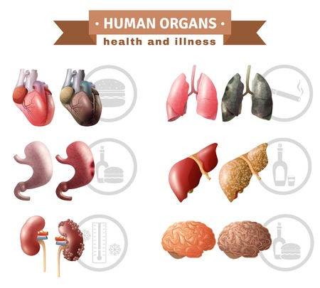 educative: Human organs health risk factors icons composition medical poster with hart liver brain and lungs educative vector illustration