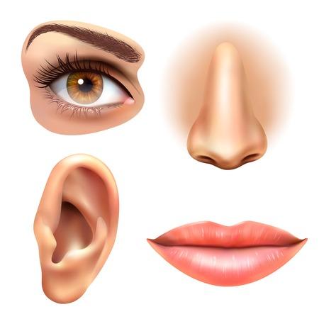 4 partes de la cara humanos órganos de los sentidos colección de iconos de cuadrados de la boca ojos nariz y la ilustración vectorial realista del oído Foto de archivo - 68906367