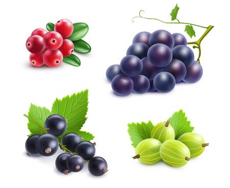 Realistische Beeren-Set mit Cranberry-Traube Stachelbeeren und schwarzen Johannisbeeren auf weißem Hintergrund Vektor-Illustration