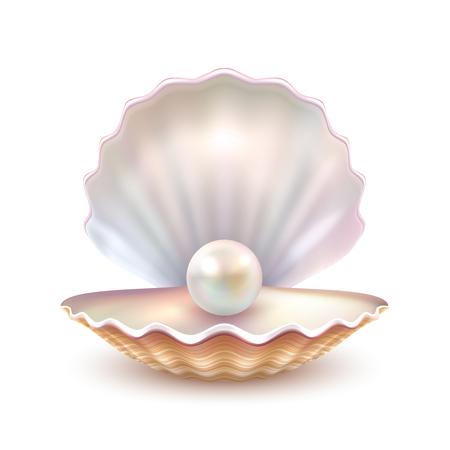 Mejor calidad de la cáscara hermosa perla natural abierto cerca ilustración realista sola imagen vectorial objeto valioso Ilustración de vector