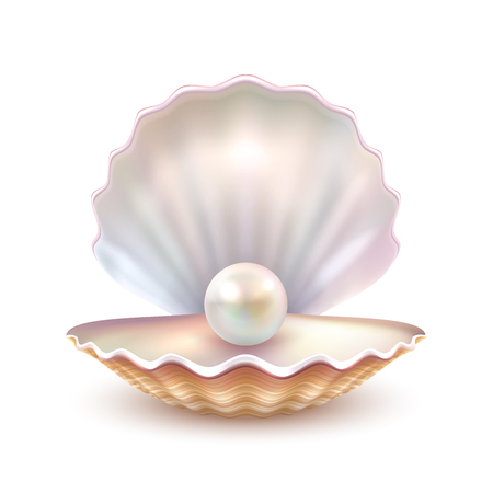 Finest quality beautiful natural open pearl shell close up realistic single valuable object image vector illustration Vectores