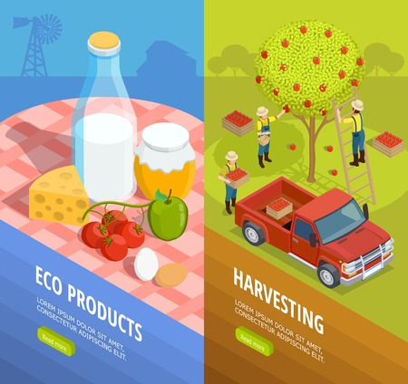 Two vertical isometric farm banner set with eco products and harvesting descriptions vector illustration