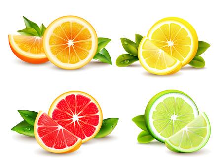 감귤 류의 과일 반쪽 및 분기 웨지 오렌지 자몽 레몬 벡터 일러스트와 함께 4 현실적인 아이콘 광장 일러스트