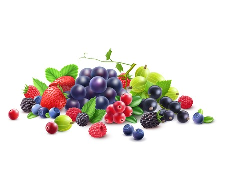 black currant: Ripe Berries Template with grape gooseberry strawberry blackberry cranberry bilberry black currant raspberry isolated vector illustration