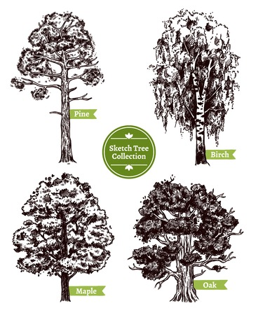 oak trees: Four various deciduous sketch trees set with pine maple birch and oak isolated on white background doodle vector illustration