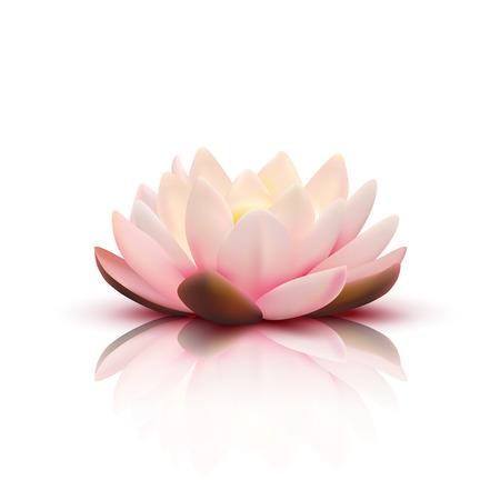 Flor aislada del loto con pétalos rosas claros con la reflexión sobre fondo blanco Ilustración de vector 3D