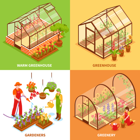 cultivated land: Four square isometric greenhouse design concept set with warm greenhouse gardeners and greenery descriptions vector illustration Illustration
