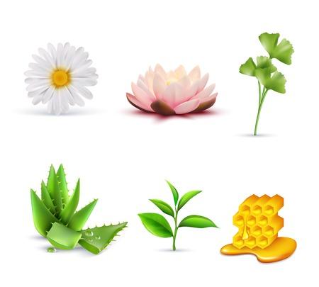 conjunto: ingredientes cosméticos orgánicos sistema incluyendo loto y el té verde manzanilla y aloe vera ilustración vectorial aislado miel