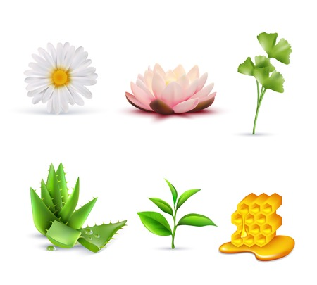 set: Organic cosmetic ingredients set including lotus and chamomile aloe vera green tea and honey isolated vector illustration