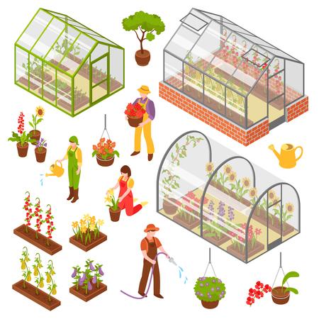 Couleur et isolé jeu isométrique icône à effet de serre 3D avec semis et entretien des plantes illustration vectorielle