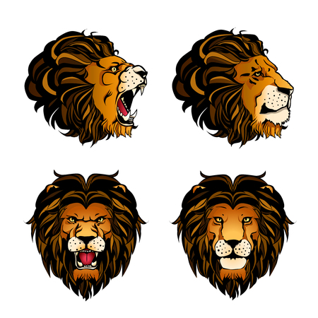 Colored set of four isolated cartoon lion heads in different angles and moods on white background vector illustration Illustration