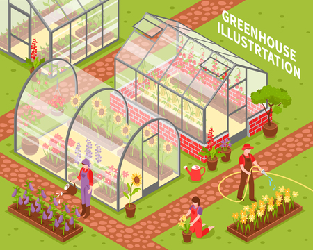 Colored isometric greenhouse composition with growing flowers in hotbeds and flower care vector illustration Ilustração