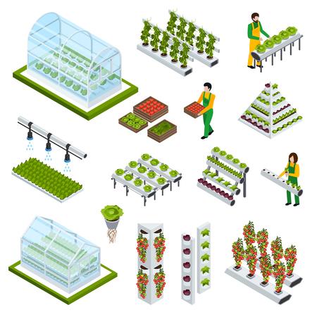 Les icônes isométriques à base de plantes hydroponiques et aérographiques avec des symboles de serre illustrent une illustration vectorielle isolée