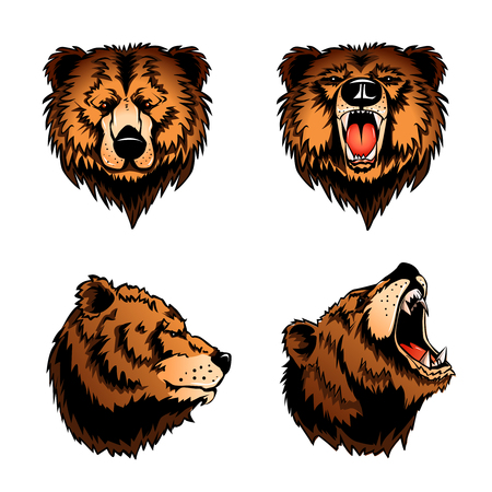 Colored set of four isolated bear heads in profile and front view on white background cartoon vector illustration Illustration