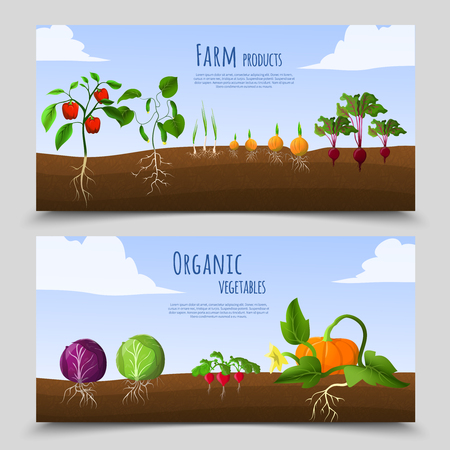 健康食品農産物と有機野菜土壌で水平方向のバナー分離ベクトル図  イラスト・ベクター素材