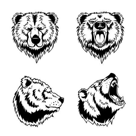 Hand drawn ink engravings set of four bear head in different angles and moods isolated on white background vector illustration Illustration