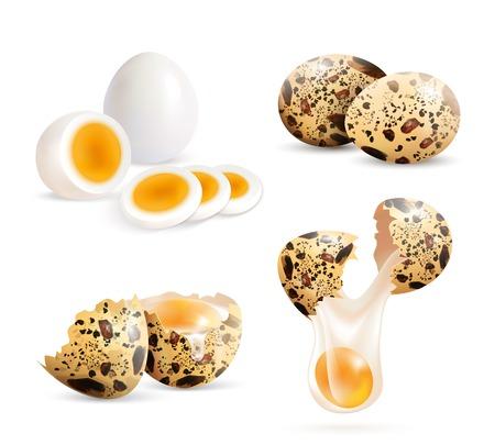 메 추 라 기 계란 고립 된 현실적인 이미지 전체 계란 및 삶은 계란 조각 벡터 일러스트 레이 션과 금이 껍질 조각 집합