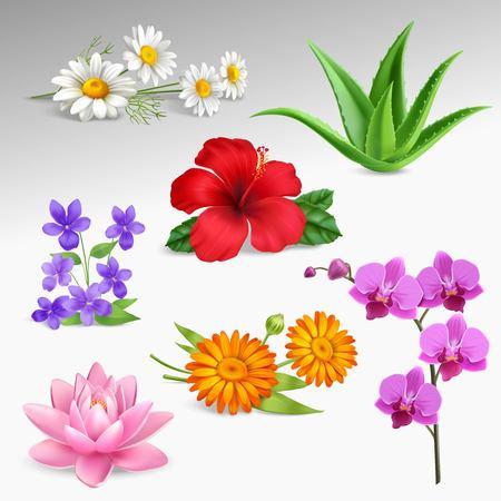 Sukkulenten tropischen Garten Pflanzen mit Gewächshaus Orchidee und Wald Veilchen Kamille Blumen Gradienten grauen Hintergrund realistische Vektor-Illustration Standard-Bild - 79092671