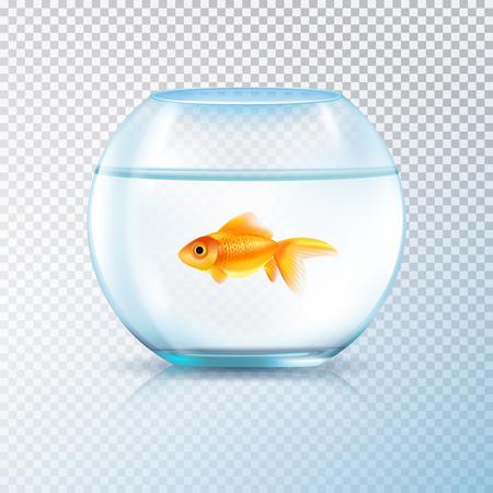 단일 황금 물고기와 투명 한 배경 벡터 일러스트 레이 션에 현실적인 이미지와 라운드 벽 물 탱크 그릇 수족관