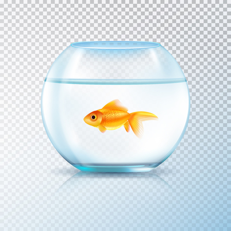 Round wall water tank bowl aquarium with single golden fish realistic image on transparent background vector illustration