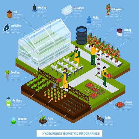 Hidroponía y aeroponics infografía isométrica conjunto con plantas y símbolos agrícolas ilustración vectorial Foto de archivo - 79591583