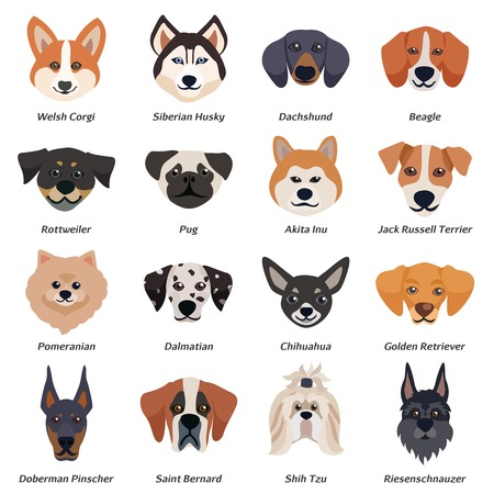 Perros de raza pura caras icono conjunto con corgi galés Siberiano husky Rottweiler Dalmatian akita inu razas ilustración vectorial