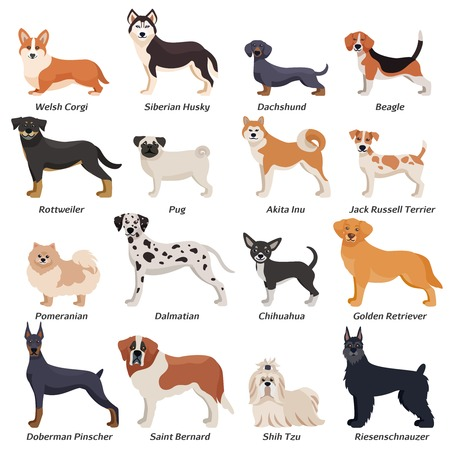 Colored purebred dogs icon set with welsh corgi Siberian husky Rottweiler Dalmatian akita inu breeds vector illustration Stock Illustratie