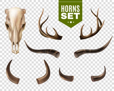 L'insieme realistico del cranio della mucca e le corna di forma differente isolati su fondo trasparente vector l'illustrazione