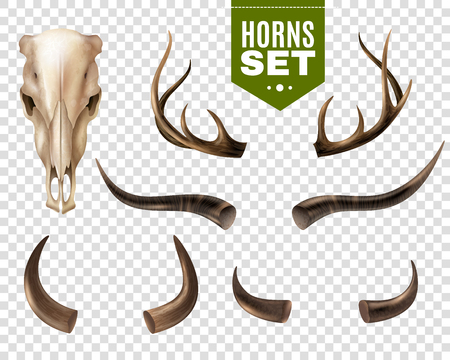 Realistic set of cow skull and horns of different shape isolated on transparent background vector illustration