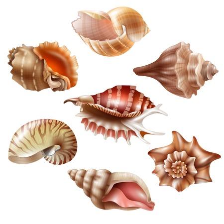 Beautiful seashells of different shape realistic set isolated on white background vector illustration Illustration