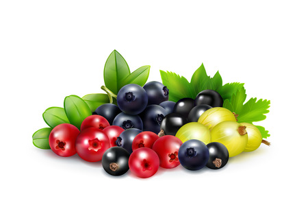 Berry mix realistic concept with leaves and branches of blueberry cranberry gooseberry   and black currant vector illustration