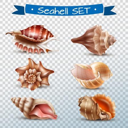 透明な背景のベクトル図に分離されて別の美しい貝殻のリアルなセット