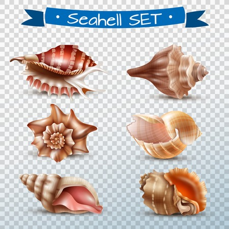 Realistic set of different beautiful seashells isolated on transparent background vector illustration