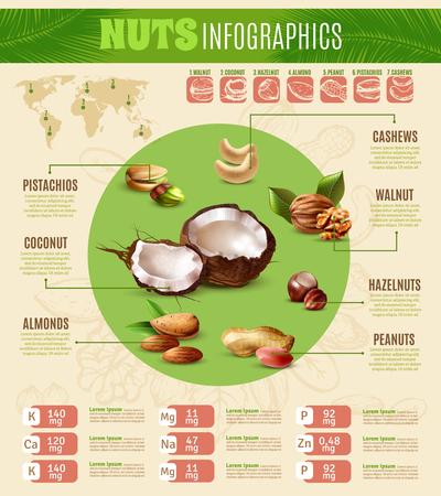 ナッツの種類についての情報を提示カラフルな現実的なインフォ グラフィック ベクトル イラスト  イラスト・ベクター素材