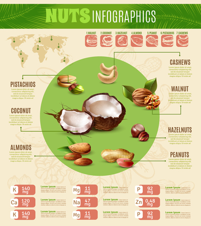 Colorful realistic infographics presenting information about different kinds of nuts vector illustration