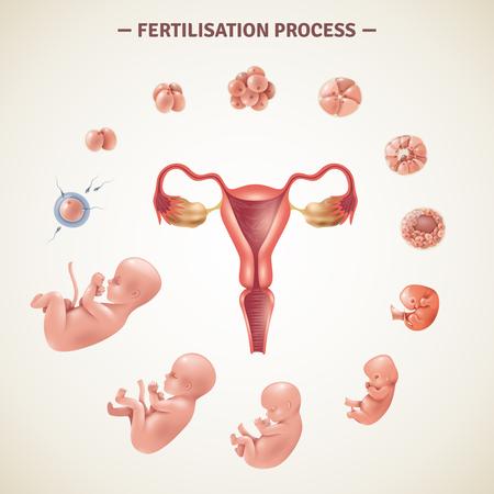 Gekleurde affiche met regeling van menselijk bemestingsproces en embryoontwikkeling in realistische stijl vectorillustratie Vector Illustratie