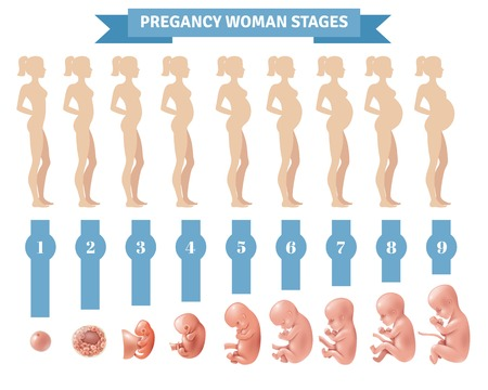 Pregnancy woman stages vector illustration with flat silhouettes of pregnant women and realistic human embryonic development icons