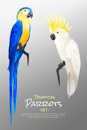 Set of realistic tropical parrots including yellow blue macaw and cockatoo on transparent background isolated vector illustration Illustration