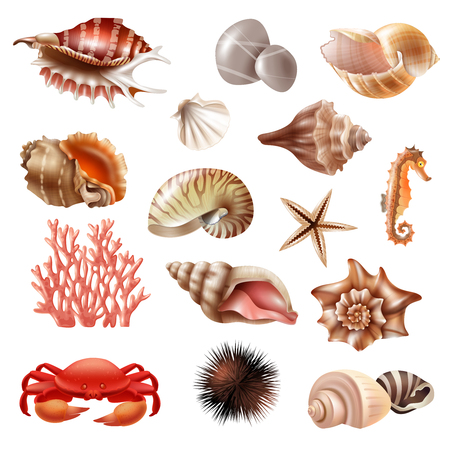 Realistic set of different beautiful seashells and other sea animals isolated on white background vector illustration
