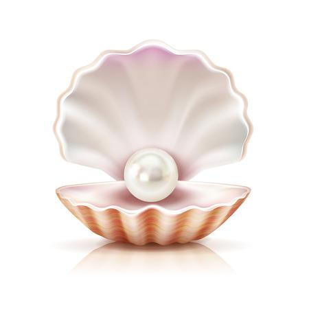 Matka perła błyszczy w otwartej skorupie słodkowodnego lub seashell mollusk zbliżenia wizerunku wektoru realistyczna ilustracja Ilustracje wektorowe