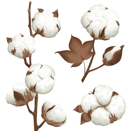 Mûr coton boll ouvert graines cas réaliste ensemble de 3 plante parties isolé illustration vectorielle