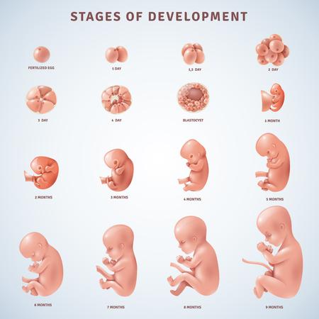 Reeks geïsoleerde decoratieve pictogrammen die stadia van menselijke embryonale ontwikkeling met periodeverheldering tonen in maanden realistische vectorillustratie